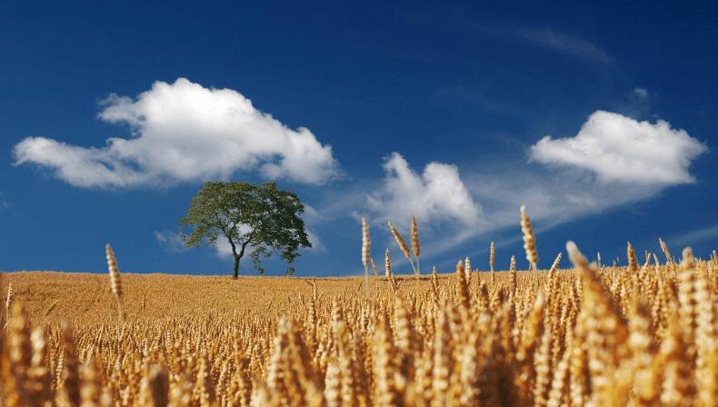 Antiche varietà legumi e cereali toscani